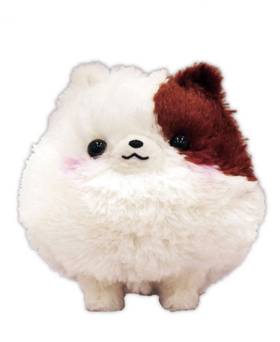 Pomeranian Amuse Lmc